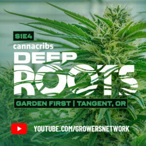 Check out Deep Roots on YouTube
